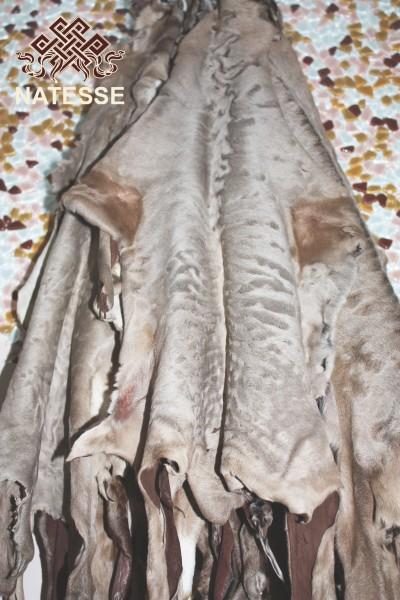 Шкурки мех каракульча свакара бежевого цвета